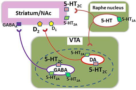 Serotonin Also Search For Receptor Serotonin 5 Ht2c Serotonin 2c Receptor