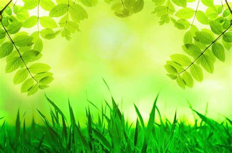 download wallpaper daun free photo spring leaves green grass tree free