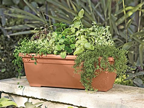herbs in window boxes how to grow edibles in window boxes hgtv