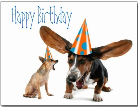 birthday puppies birthday wishes with puppies page 7