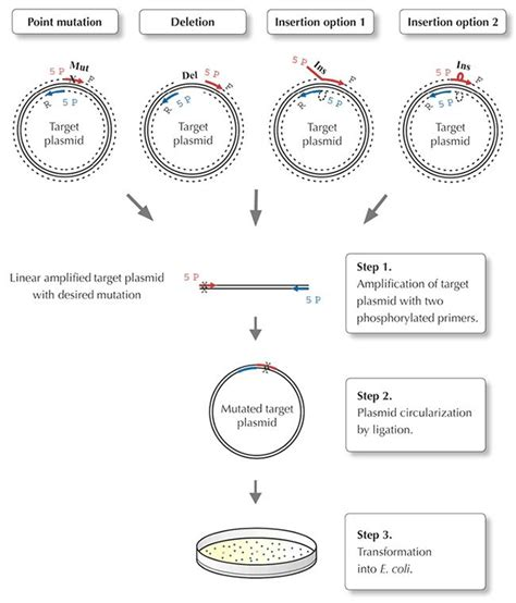 Phusion Site-Directed Mutagenesis Kit - Thermo Fisher ...