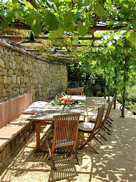 growing grapes in backyard 25 best ideas about small pergola on pinterest garage