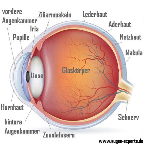 Beschriftung Des Auges by Anatomie Und Aufbau Des Menschlichen Auge Erkl 228 Rt