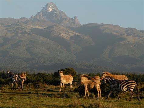 In Kenya safari in kenya top 5 safari destinations in kenya
