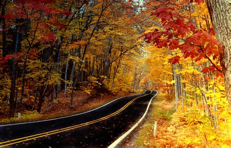 in color michigan the science of fall color michigan in pictures
