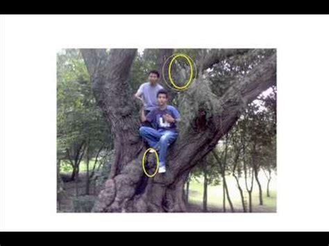 imagenes reales evidencia de duendes reales no es mentira youtube