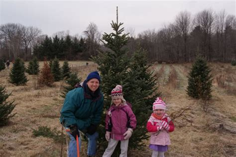 where to cut your own christmas tree all over albany
