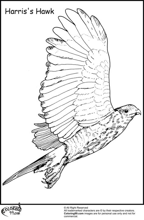hawk coloring pages hawk free coloring pages