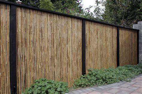bamboo backyard privacy bamboo grove photo bamboo fence