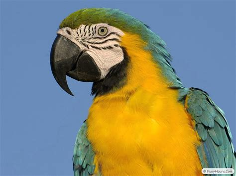 more exotic birds wallpaper your title