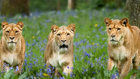 printable vouchers for west midlands safari park longleat safari park discount voucher vouchers lets go