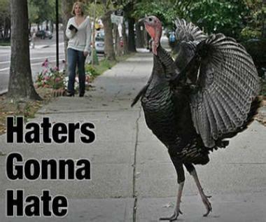 Turkey Meme - haters gonna hate turkey meme