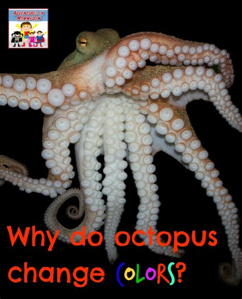 how do octopus change color animals for