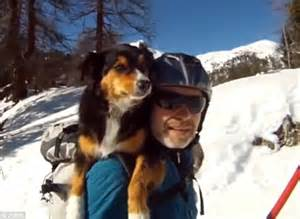 dogs on skis sits across owners shoulders as he skis mountain in daily mail