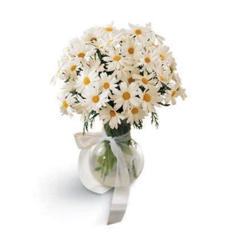 Splendor white daisy bouquet at send flowers