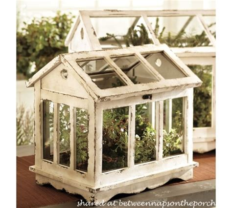 table top herb garden tabletop greenhouse or terrarium for growing herbs