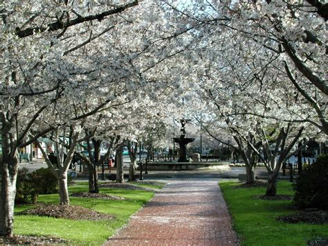 Cherry Blossom Oleh Christa away from the city and explore things to
