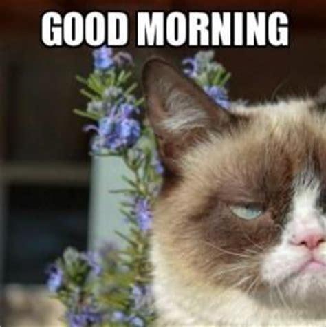 Angry Cat Good Meme - angry cat meme kappit