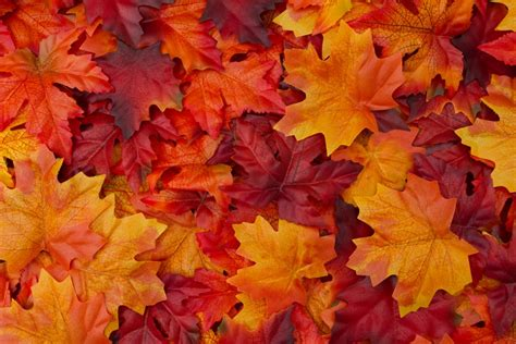 Autumn Leaves Background   P & G Credit Union