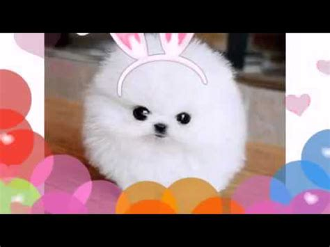 imagenes de perritos kawaii perritos kawaii el v 237 deo no es mio youtube