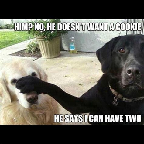 Recent Funny Memes - recent memes tumblr image memes at relatably com