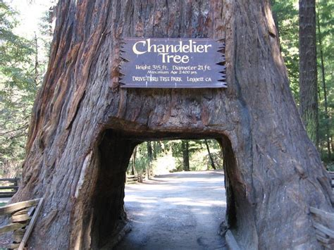 Chandelier Drive Through Tree Chandelier Tree News