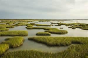 Marsh Tx Gulf Coast Habitat Becomes State Park Vogel Talks