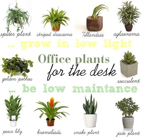 best plants for office find a way by jwp low light and low maintance plants for