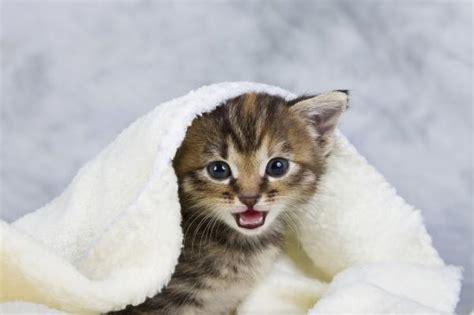 una noche un gato c 243 mo re 241 ir a un gato cachorro 5 pasos uncomo