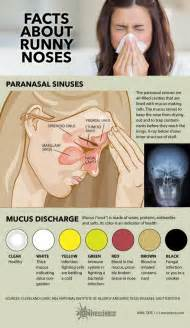 mucus color chart what your snot says about you infographic