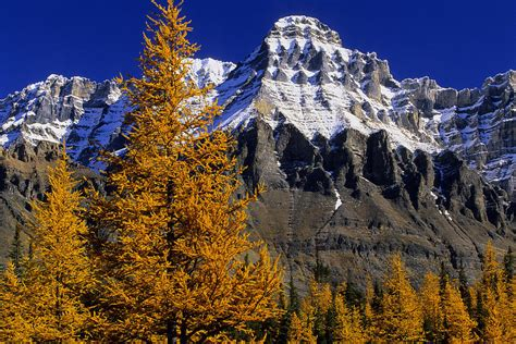Alpine Duvet Cover Alpine Larches And Mount Huber Yoho Photograph By John