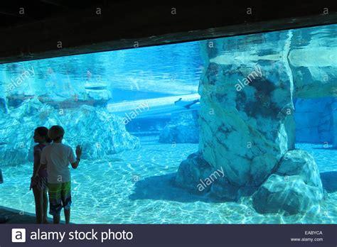 aquatica seaworld florida usa aquatica orlando florida stock photos aquatica orlando
