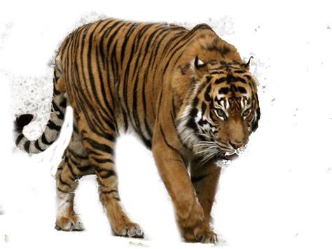 Resume Samples Good by Tiger Png Transparent Images