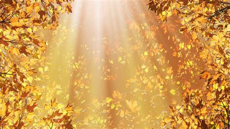 fall backgrounds golden fall leaves background motion background
