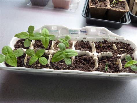 Seed And Garden by 22 Budget Gardening Ideas Garden Ideas On A Budget Balcony Garden Web