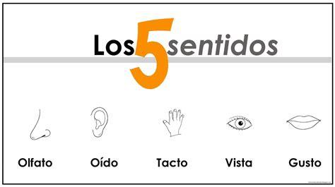 los 5 sentidos de los 5 sentidos la vista y el o 237 do