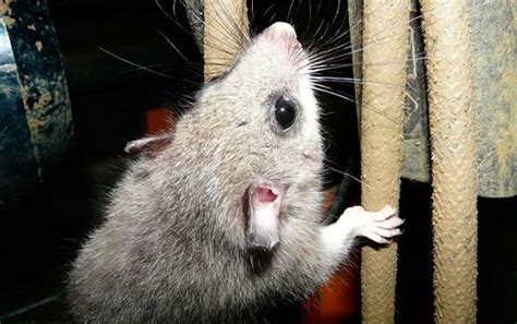 best poison for mice in attic how to get rid of mice the best mice killers and traps
