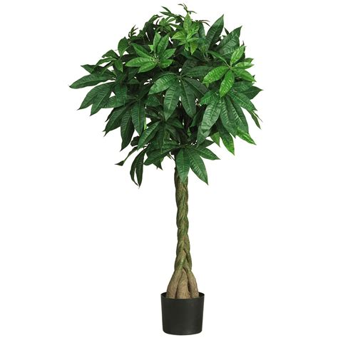 51 inch money tree potted 5249