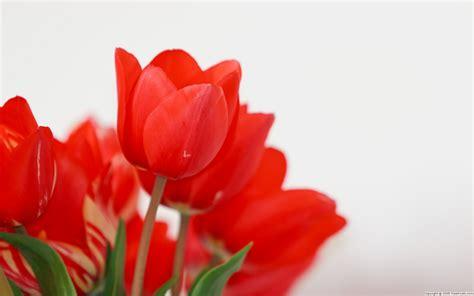 a fiori fiori wallpaperart