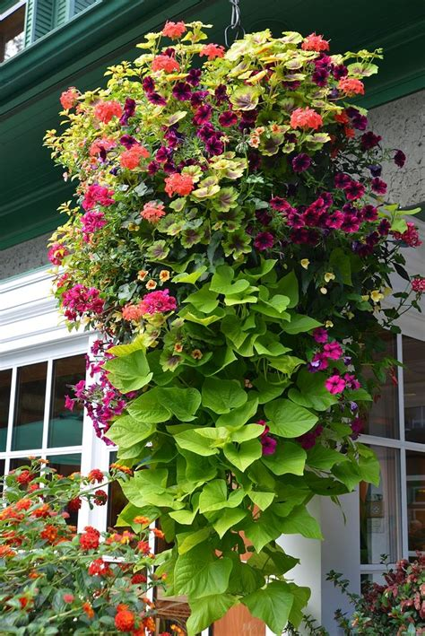 hanging flower garden best 25 hanging flower baskets ideas on