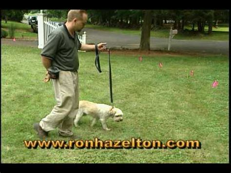 how to on invisible fence cheap fence problems funnydog tv