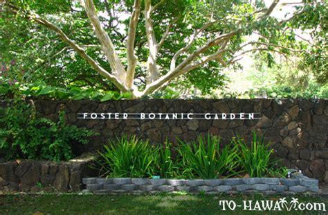 Botanical Gardens Oahu Hawaii Foster Botanical Garden