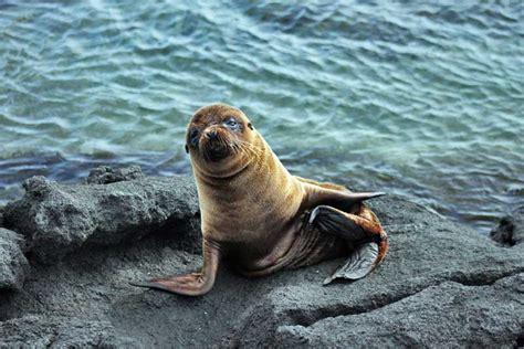 PHOTO: Baby Sea Lion, Galapagos Islands, Ecuador