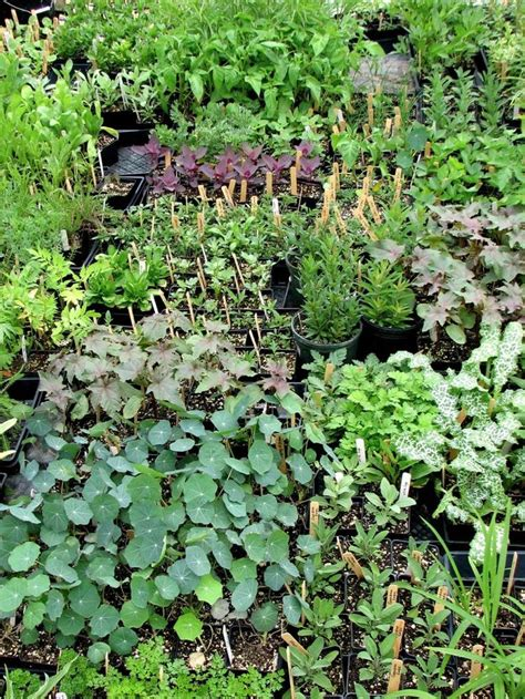 growing herbs indoors from seeds 178 best images about into the garden on pinterest