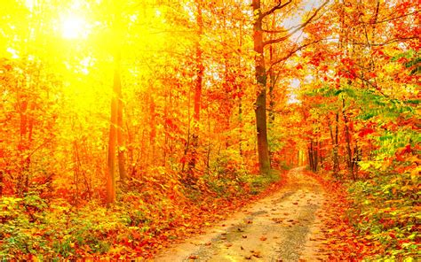 amazing color for the fall landscape landscaping ideas leaf tree forest leaves color amazing seasons cool