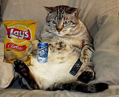 fat couch potato my cat is a couch potato ign boards