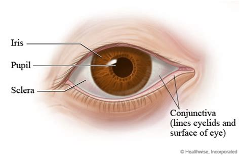 outer eye diagram eye structures front and side views