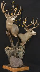 mule deer pedestal mounts mule deer gov t mule and pedestal on