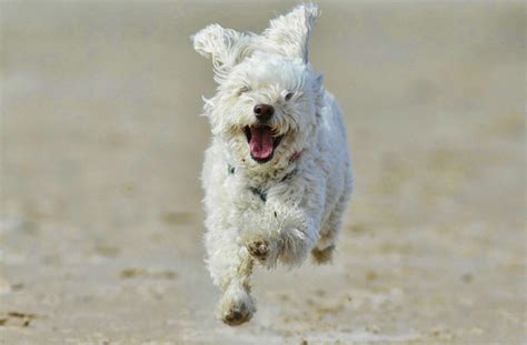 beaches where dogs are allowed cornwall friendly beaches