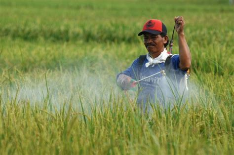 Sarung Tangan Petani lagi petani meninggal saat aplikasi pestisida adakah